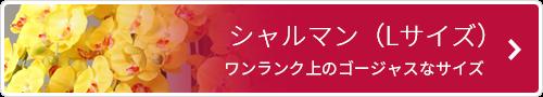 シャルマン(5本)